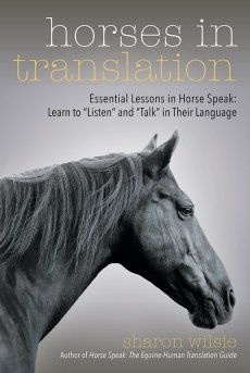 Horses In Translation